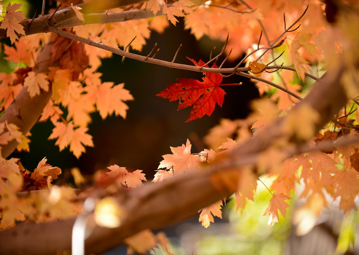 sedona arizona fall